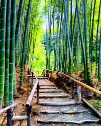 bamboo land nursery and parklands bamboo walkway idea walkway ideas pinterest walkway ideas