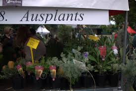 native plant wholesalers native plant suppliers at the collectors u0027 plant fair 2015 mallee