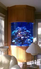 1159 best aquariums images on pinterest aquarium ideas fish