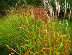 growing ornamental grasses bayer advanced