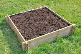 Wooden Vegetable Garden by Soil In A Square Wooden Tray For Mini Vegetable Garden Stock Photo