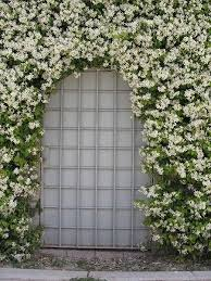 Fragrant Shade Plants - 49 best shade plants for austin tx zone 8 images on pinterest