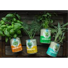Indoor Vegetable Garden Kit by Garden In A Can Set Of 4 Herb Growing Kit Uncommongoods