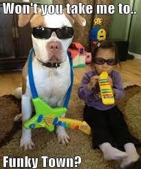 Dirty Adult Memes - funny dog and kid dirty adult jokes memes pictures cute animals