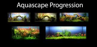 Aquascape Aquascape Of The Month June 2009