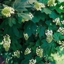 Fragrant Plants Florida - plants to please florida gardeners