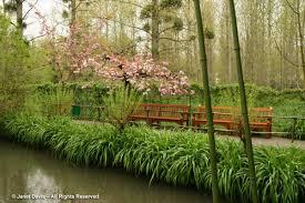 bamboo land nursery and parklands april 2017 janet davis explores colour