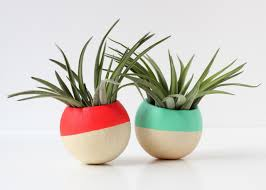 how to decorate with air plants hgtv