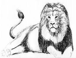 lion colt u0027s comments
