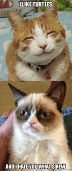 I Like Turtles Meme - i like turtles and i hate you what s new grumpy cat vs happy cat