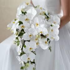 orchid bouquet white phalaenopsis orchid bouquet