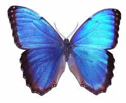 second marketplace nano emitter blue butterfly basic version