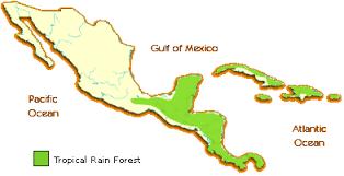 south america map rainforest rainforests