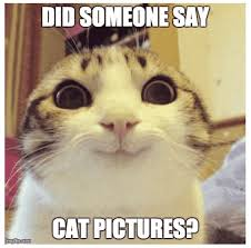 Smiling Cat Meme - facebook cat aol image search results