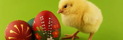 bunny easter easter symbols and traditions holidays history