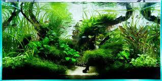 Aquascape Freshwater Aquarium Aquarium Design Group 90cm Ada Aquascape Aquarium Pinterest
