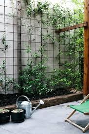 modern garden design raised beds hardwood privacy screen ceadr