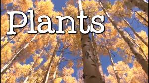 what is a plant all about plants for freeschool