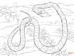 corn snake devouring dead mouse coloring page free printable