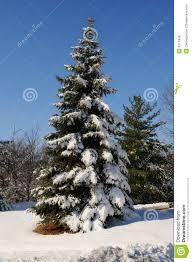 pine tree with snow royalty free stock photos image 4214428