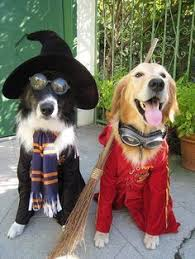 Funny Halloween Costumes Cats 25 Harry Potter Dog Costume Ideas Harry