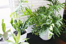 five easy to care for houseplants u2013 a beautiful mess