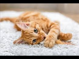 Cats In Small Spaces Video - this cool job requires a spare room or space in the garden and a