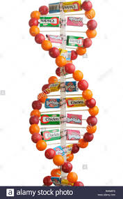 best 10 dna model ideas on pinterest dna project dna and dna