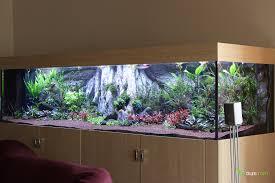 Wohnzimmertisch Aquarium 2 5 M Diskusbecken Kundenprojekt Update Nach 3 Monaten Aquarium