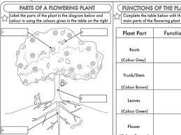 fresh lettuce biology resources teaching resources tes