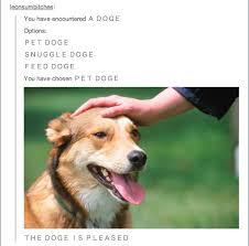 Doge Meme Tumblr - everything you always wanted to know about doge but were afraid to