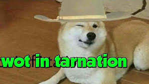 Doge Meme Tumblr - tumblr amazoncom doggo mug what in tarnation doge dank memes gift