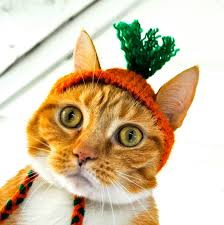 Pet Cat Halloween Costumes Cat Party Hat Orange And Green Hand Knit Cat Costume