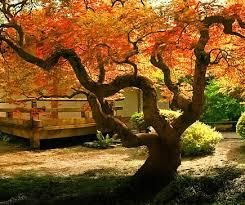 cuisine automne crédence de cuisine arbre d automne c macredence com
