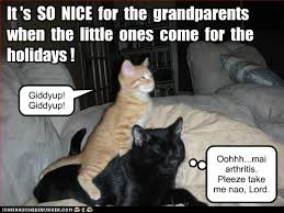 Asian Grandpa Meme - lolcats grandpa lol at funny cat memes funny cat pictures with