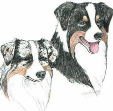 australian shepherd club of america ashley u0026 39 s aussies links to shelters and other breeders