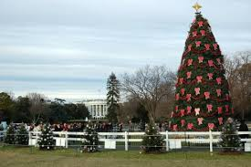 the national christmas tree at the white house holidappy