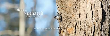 Blue Bird Home Decor Home Decor And Gifts Nuthatch Decor And Gifts