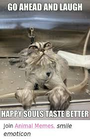 Meme Animals - go ahead and laugh happy souls taste better join animal memes smile