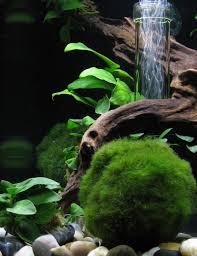 Aquascape Fish 181 Best Aquariums Images On Pinterest Aquarium Ideas