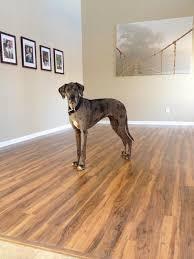 montgomery apple pergo max laminate flooring pergo flooring