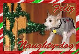 dog christmas christmas card ideas for your dog romp italian greyhound