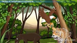Dominant Plants Of The Tropical Rainforest - tropical rainforest animal adaptations video u0026 lesson transcript
