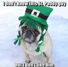 St Pattys Day Meme - memes images funny st patrick s day pug dog meme wallpaper and