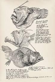 humpback anglerfish melanocetus johnsonii for practice some