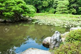 zen garden with lotus leaves and a pond in kyoto japan stock