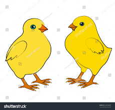 two small chicken on white background stock vector 360403607