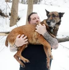 belgian sheepdog illinois herndon couple rescues retired service dogs news dailyitem com