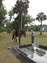 Obstacle 441 Best Horse Obstacle Course Images On Pinterest Horses Horse