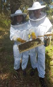 backyard beekeeping in western australia perth